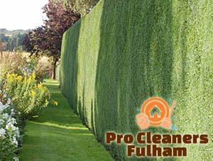 Trimmed Hedge Fulham
